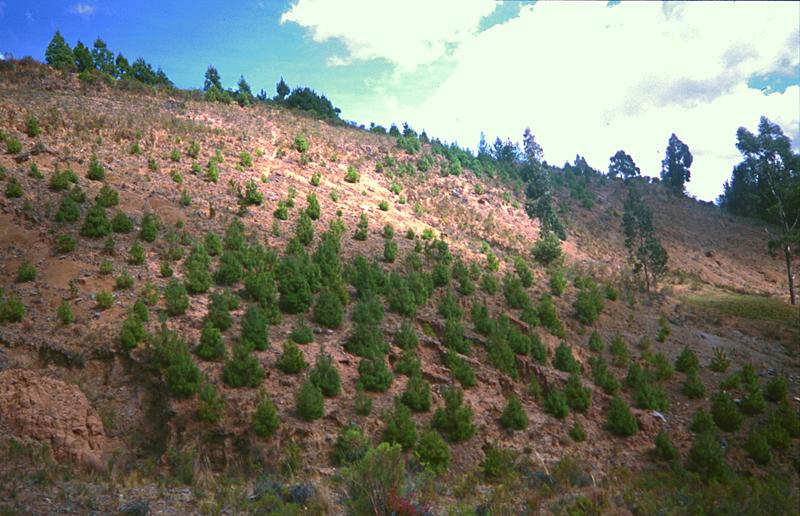 Aufforstungsprojekte im Hochland von Cajamarca